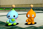 A two-tone regular Chao with an monotone orange Chao