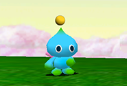 An adult Chao