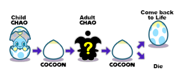 Dreamcast Chao Life-Cycle