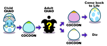 Modern Game Chao Life-Cycle